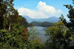 India - Kerala - Munnar - Kundala Lake - 3 (asienman) Tags: india kerala munnar asienmanphotography kundalalake
