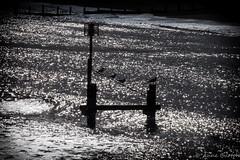 Four Birds (xxKnuckles) Tags: sea england seagulls seascape birds landscape coast march suffolk s groyne southwold sparkling glittering beaach foud