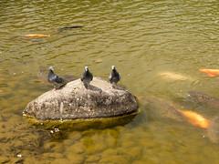 P1590722 (Rambalac) Tags: asia japan lumixgh4 pond water азия япония вода пруд