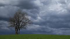 Ciel d'orage ***--+°-°° (Titole) Tags: tree arbre sky stormy grass titole nicolefaton friendlychallenges thechallengefactory challengeyouwinner gamewinner perpetual 15challengeswinner storybookwinner