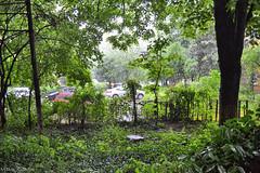 Rainyday (VictorSZi) Tags: home rain spring romania april bucharest dt bucuresti drumultaberei