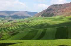 Zwischen Schlat und Reichenbach (to.wi) Tags: landwirtschaft wiese alb reichenbach schwbischealb gppingen wasserberg schlat fuchseck