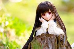20164DDS03 (twinkle_077) Tags: doll pentax  ks2 dds dollfiedream    dds