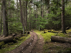 """Avalanche Trail • <a style=""""font-size:0.8em;"""" href=""""http://www.flickr.com/photos/63501323@N07/26108495093/"""" target=""""_blank"""">View on Flickr</a>"""