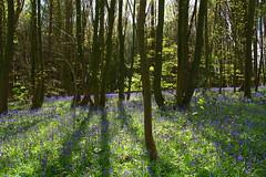 IMG_2083a (Joy Shakespeare) Tags: uk coventry woodlandtrust allesley elkinwood