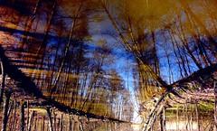 Surreal (sakarip) Tags: trees reflection water waterfront sakarip