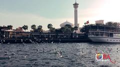 Segal bird flying_Abra_Bur Dubai (R A J U A L F A J Photography) Tags: dubai abra uae segal bird nature water river طائر سيجال ، أبرا بر دبي الإمارات العربية المتحدة