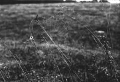 (the_analogue_me) Tags: blackandwhite blancoynegro film nature lomo lomography alba web spiderweb natura erba campo fields pelicula analogue rugiada prato biancoenero analogica mattino pellicola ragnatela lomofilm niccollandi niccololandi theanalogueme