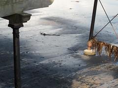 Pier weed (Nekoglyph) Tags: black seaweed beach wet silver pier seaside sand legs yorkshire cleveland saltburn seacoal