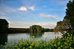 FIUME TEVERE (urbanifausto) Tags: paesaggio fiumi