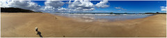 Beach Pug Panorama (theimagebusiness) Tags: uk travel light sea sky panorama cloud dog sunlight seascape cold beach water beauty weather yellow landscape outside outdoors freedom scotland seaside sand edinburgh pretty natural cellphone pug sunny bluesky location northsea attractive mobilephone k9 iphone eastlothian puglet momentintime scottishweather squishedface visitscotland scottishseaside iphoneography theimagebusiness photographersinscotland theimagebusinesscouk