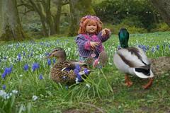 Sanrike ... alle meine Enten ... (Kindergartenkinder) Tags: park essen dolls outdoor sony feld wiese blumen enten landschaft annette tier vogel stockente gruga himstedt kindergartenkinder sanrike
