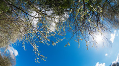 Blossom (kh1234567890) Tags: pentax fisheye 8mm pentaxforums samyang8mmf35 k5ii