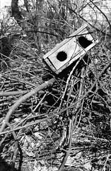 Sad robot - Patterson Park, Kingston, Ontario (Richard Wintle) Tags: wood blackandwhite bw ontario canada film monochrome 35mm garbage woods asahi pentax takumar kingston 200 spotmatic 135 smc pattersonpark fomapan spotmaticf adox adonal film:iso=200 fomafomapan200 film:brand=foma film:name=fomafomapan200 developer:brand=adox adoxadonal developer:name=adoxadonal filmdev:recipe=10692