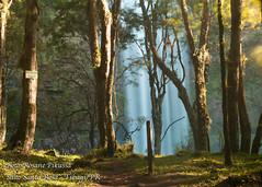 Salto Santa Rosa (Rosane Pikussa) Tags: camping paran natureza paisagem canyon viagem fotografia turismo cachoeira aventura trilha 2014 guartel tibagi saltosantarosa saltopuxanervos recantodadora rosanepikussa