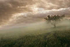patience (simoncini.nicola) Tags: italy panorama tree field fog landscape countryside haze nikon italia alone outdoor wheat grain foggy olive hills emotional visual hdr marche bracketing d60