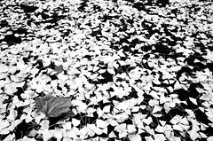 may we meet again (Russell Siu) Tags: park winter bw white black monochrome leaves tokyo zen wabisabi hibiya