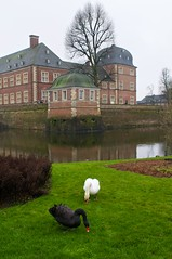 (allanimal) Tags: bird castle animals architecture swan stockcategories afszoomnikkor2470mmf28ged
