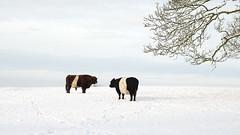 Anglų lietuvių žodynas. Žodis under the weather reiškia pagal orai lietuviškai.