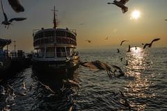 On a sunday morning..  Bosphorus, ferry and seagulls.. (adnangler) Tags: morning light shadow sea sun seagulls reflection birds ferry backlight turkey sunday istanbul sundaymorning bosphorus kabata nikond800 flickrturkey