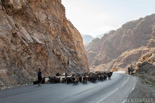 Sprowadzanie zwierząt z gór w cieplejsze doliny