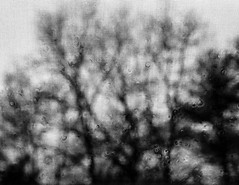 Through The Weeping Glass # 3 (SopheNic) Tags: trees blackandwhite bw window monochrome rain bush iso400 screen 35mmfilm hp5 ilford selfdeveloped id1111 canonelan7e