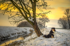 The Sound Of Silence (EXPLORE #10 - 01/11/16) (der_peste (busy)) Tags: sunset sky dog snow tree water colors beautiful clouds reflections germany landscape bayern deutschland bavaria glow sonnenuntergang dof sundown bokeh f14 sony 85mm himmel wolken canine hund aussie australianshepherd walimex a7 cloudscape reflexionen samyang glowingsky sonya7 samyang8514 walimexpro8514