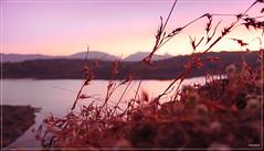 Bhandardara (neerajmondia) Tags: lake grass dam bhandardara