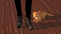 Recon (alexandriabrangwin) Tags: world wood black silly leather standing cat computer ginger 3d high graphics funny shiny floor boots secondlife virtual heel ankle roscoe vomit admiring cgi hairball alexandriabrangwin
