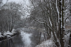 snowy reflections (Harry McGregor) Tags: 16 january 2016 dumfrieshouse cumnock ayrshire scotland nikon d3300 snow winter trees woodland countryside outdoor fields water stream river burn reflections riverbank branches 52in2016 lugarwater