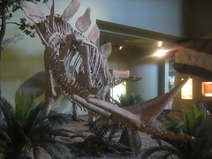 New Mexico Museum of Natural History and Science (FigmentJedi) Tags: newmexico stegosaurus albequerque newmexicomuseumofnatureandscience