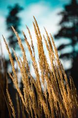Winter Grass (Neil Volk) Tags: wheat relaxing crop peacful