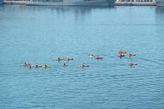 Cartagena - Hafen (CocoChantre) Tags: boot menschen murcia es hafen cartagena verkehr schiff spanien kajak seefahrt paddeln wassersport ruderboot ruderer interaktion ttigkeiten