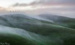 IMG_0012-3 (katiewong511) Tags: park winter fog sunrise outdoor hiking windmills trail livermore vasco regionalpark