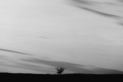 Big - 40/366 (Gruenewiese86) Tags: white black nature monochrome canon germany landscape outdoor natur himmel minimal 365 minimalism landschaft weiss schwarz harz 6d 366 einfarbig minimalismus 3652016