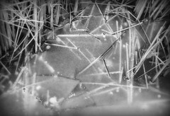 IMG_7070 (Mat_B) Tags: park winter white lake abstract black cold ice reed nature water cat photography frozen pattern natural state walk tail january hills area moraine thaw defiance 2016