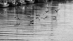 Kurbagalidere - III (esintu) Tags: seagulls reflection water lines turkey river boats boat fishing ripple seagull wave bubbles istanbul gas pollution bubble ripples waste sewer kadikoy polluted sewege kurbagalidere