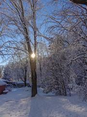 DSC01626-2 (johnjmurphyiii) Tags: winter usa snow connecticut shelly cromwell originaljpeg johnjmurphyiii 06416 sonycybershotdsch90