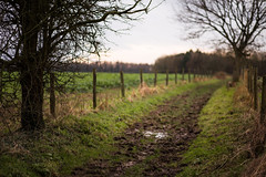 Winter Sunset (Steve Vallis) Tags: wood sunset england rural path farm somerset fields