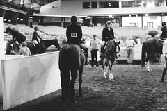 Adult Hunter In-gate (suzcphotography) Tags: show horse monochrome canon 50mm adult riding jumper hunter equestrian virgina equine t3i ingate 3ft swvhja
