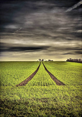 Wheat field (Peter Daum 69) Tags: cloud nature field landscape scenery mood wheat natur wolken natura frucht saat korn stimmung weizen weizenfeld