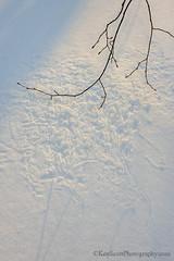 Snart ... (snow art) (Ken Scott) Tags: winter usa snow michigan lakemichigan greatlakes scribbles february hdr treebranch freshwater voted leelanau 2016 naturesart 45thparallel sbdnl sleepingbeardunenationallakeshore mostbeautifulplaceinamerica