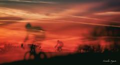 Wahr oder falsch? (cornelia_auguste) Tags: abendstimmung abenddämmerung abendlicht fahrradfahrer doppelbelichtung rheinaue düsseldorf bikerider outdoor himmel sky sonnenuntergang rot red light