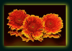 Flowers for a lovely friend. (Cleide@. a bit slowly ) Tags: brazil  flower art texture digital photo exotic 2016 ps6 artdigital sotn awardtree cleide netartii