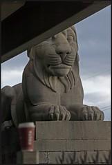 The lion's share! (peterdouglas1) Tags: costa lions menaistraits britanniabridge
