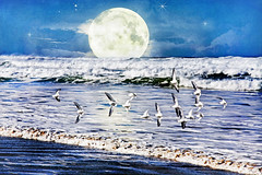 a blue dream (1crzqbn) Tags: ocean blue light naturaleza moon seascape bird art beach water reflections mar waves natur flight 7d sanderlings hss sliderssunday