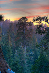 730,000 Sunsets (pbuschmann) Tags: california sunset tree giant nationalpark eternity sequoia sequoiatree