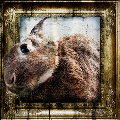 Beyond Picture Perfect (Jeric Santiago) Tags: pet rabbit bunny escape conejo lapin hase kaninchen pictureframe comfortzone pastandpresent   compositephotography movingon fineartsphotography winterrabbit