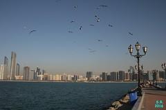 Abu Dhabi Februar 2016  120 (Fruehlingsstern) Tags: abudhabi marinamall ferrariworld canoneos750 scheichzayidmoschee