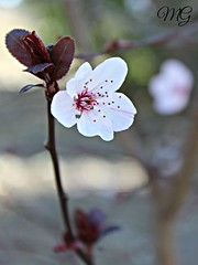 04 Marzo 2016 (Marta Garca P) Tags: sun spring sevilla sunny italica santiponce